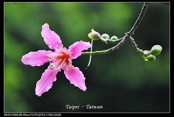111006--Flowers & Squirrels 002-800_nEO_IMG.jpg