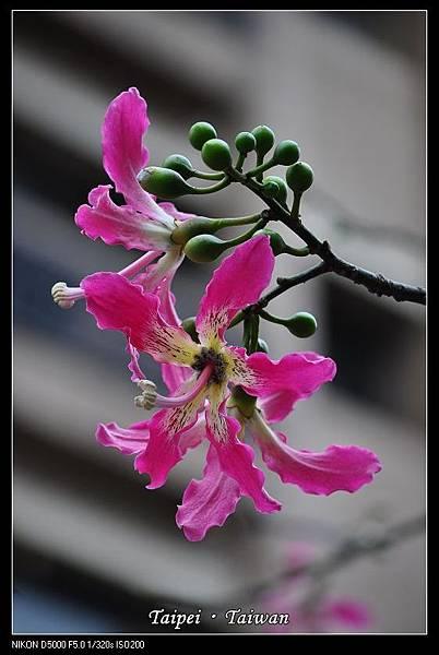 111006--Flowers & Squirrels 008-800_nEO_IMG.jpg