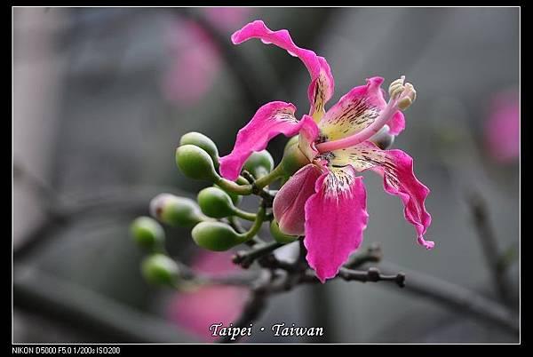 111006--Flowers & Squirrels 013-800_nEO_IMG.jpg