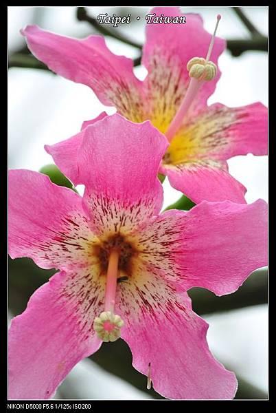 111006--Flowers & Squirrels 065-800_nEO_IMG.jpg