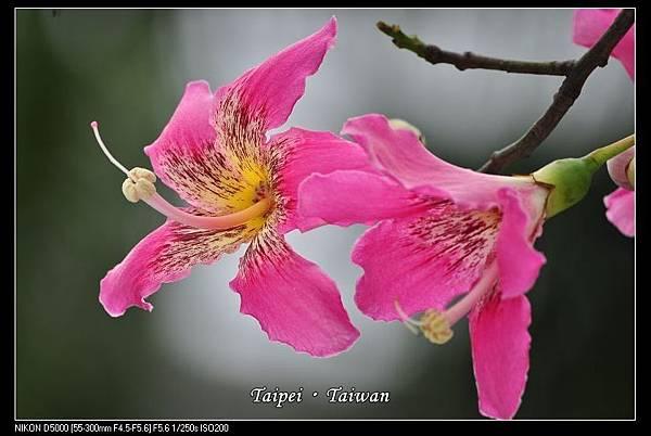 111006--Flowers & Squirrels 072-800_nEO_IMG.jpg