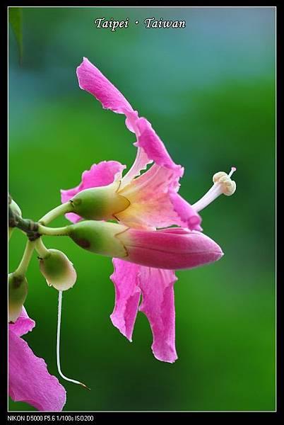111006--Flowers & Squirrels 086-800_nEO_IMG.jpg