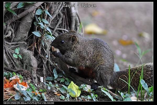 111006--Flowers & Squirrels 027-800_nEO_IMG.jpg