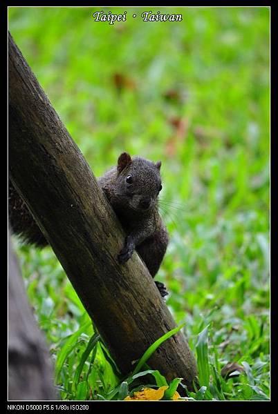 111006--Flowers & Squirrels 035-800_nEO_IMG.jpg