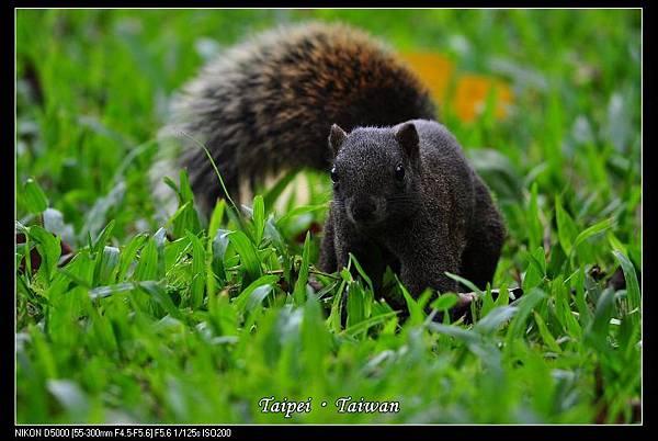 111006--Flowers & Squirrels 040-800_nEO_IMG.jpg