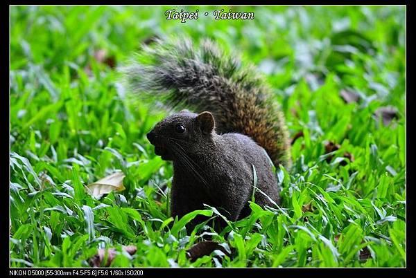 111006--Flowers & Squirrels 053-800_nEO_IMG.jpg