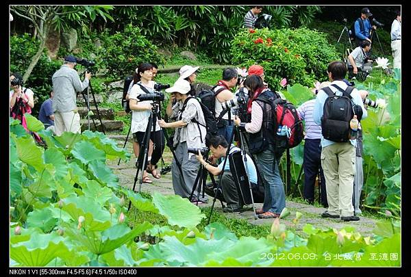 120609--Zhide Waterlily V1 010-800_nEO_IMG-shadow