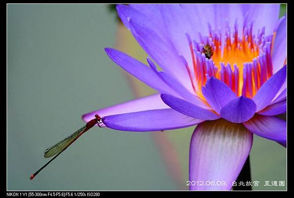 120609--Zhide Waterlily V1 178-800_nEO_IMG-shadow