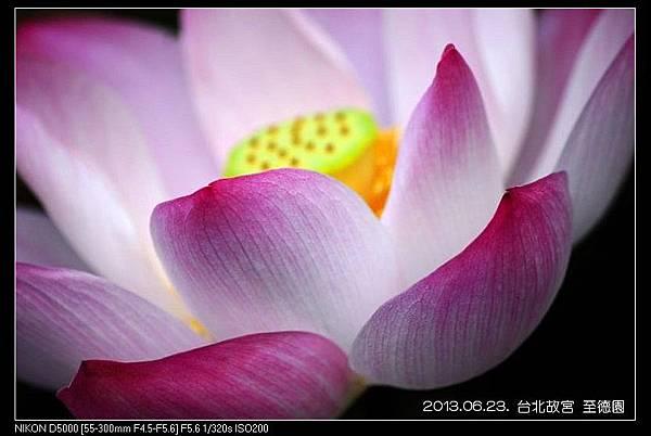 nEO_IMG_130623--ZD Yuan waterlily 028-800