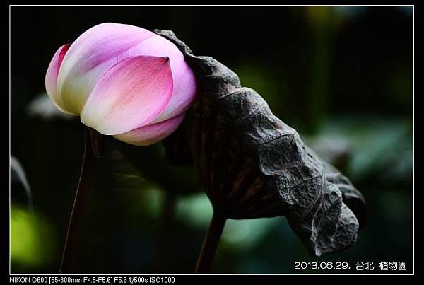 nEO_IMG_130629--Waterlily D600 097-800.jpg