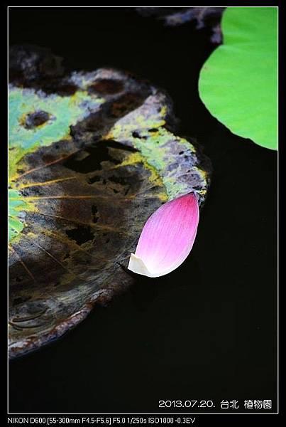 nEO_IMG_130720--Waterlily D600 102-800.jpg