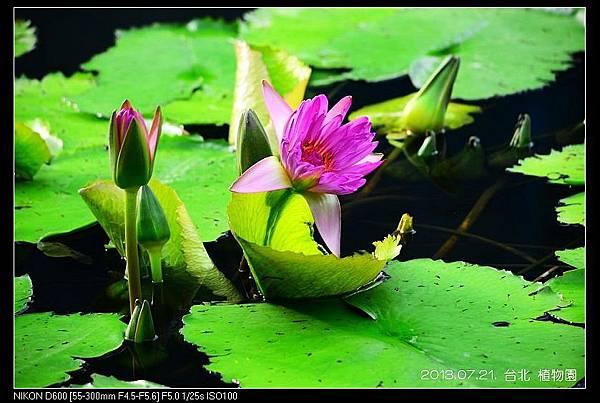 nEO_IMG_130721--Waterlily D600 009-800.jpg