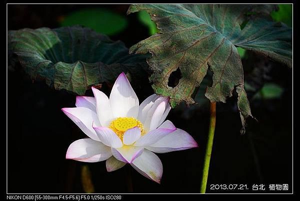 nEO_IMG_130721--Waterlily D600 018-800.jpg