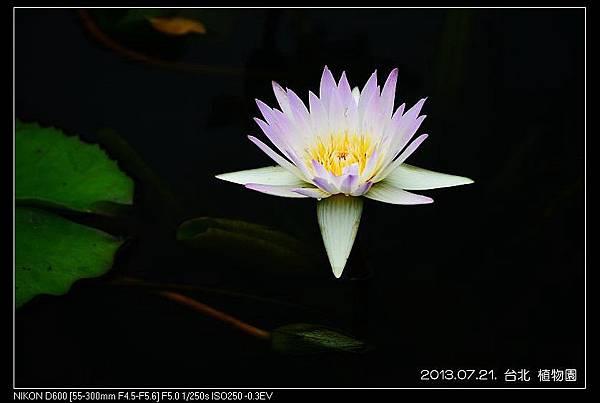 nEO_IMG_130721--Waterlily D600 058-800.jpg