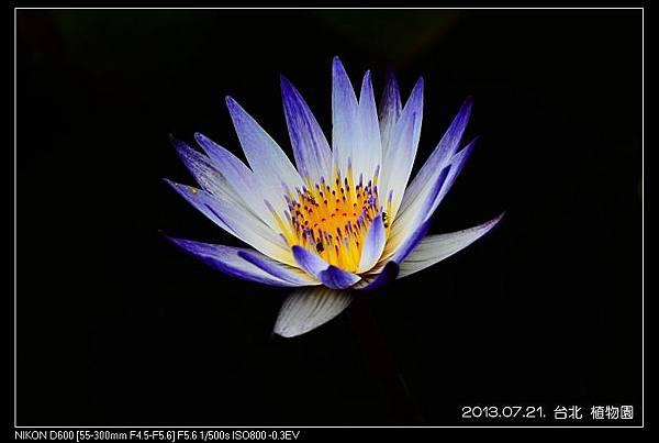 nEO_IMG_130721--Waterlily D600 061-800.jpg
