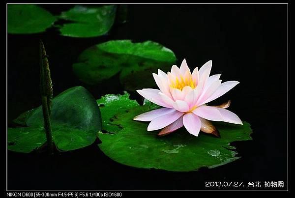 nEO_IMG_130727--Waterlily D600 116-800.jpg