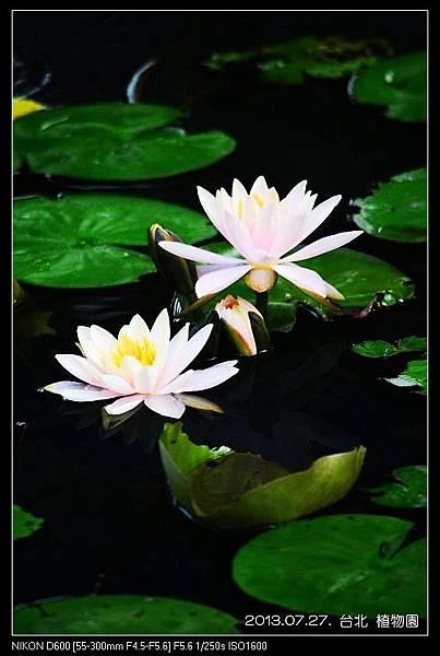 nEO_IMG_130727--Waterlily D600 122-800.jpg