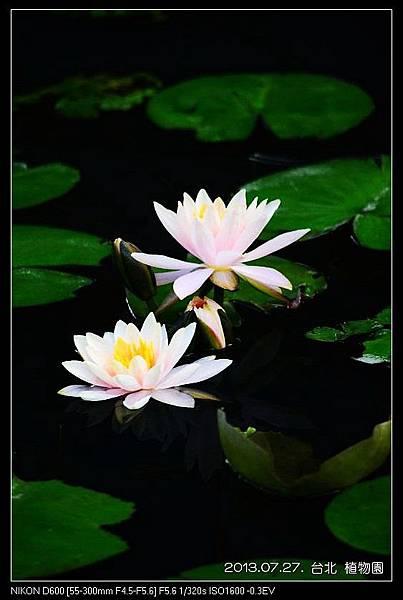 nEO_IMG_130727--Waterlily D600 126-800.jpg