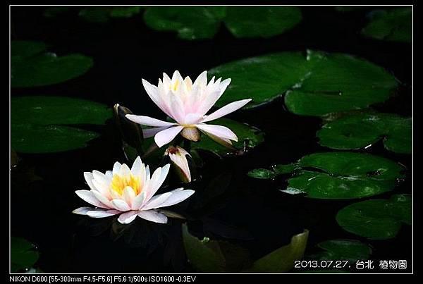 nEO_IMG_130727--Waterlily D600 128-800.jpg