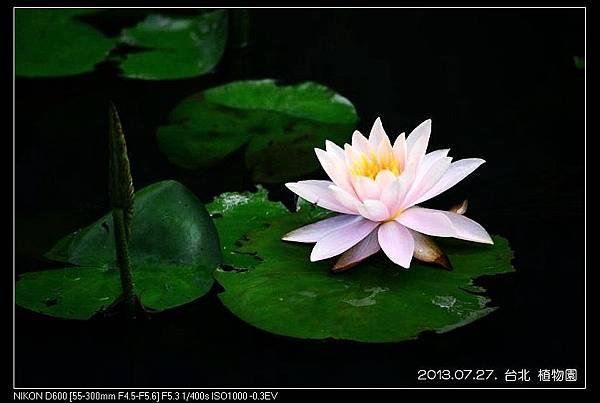 nEO_IMG_130727--Waterlily D600 134-800.jpg