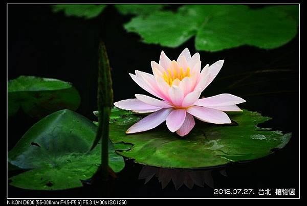 nEO_IMG_130727--Waterlily D600 137-800.jpg