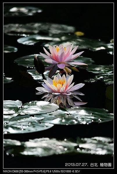 nEO_IMG_130727--Waterlily D600 144-800.jpg