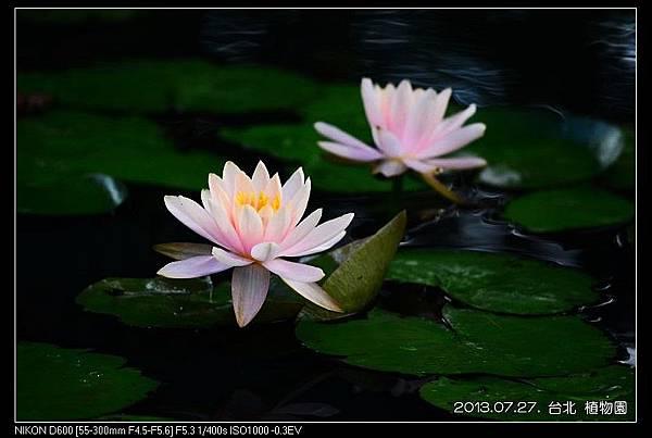 nEO_IMG_130727--Waterlily D600 148-800.jpg