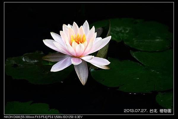 nEO_IMG_130727--Waterlily D600 152-800.jpg