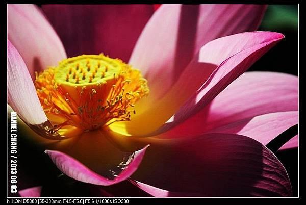 nEO_IMG_130803--Waterlily D5000 089-800.jpg
