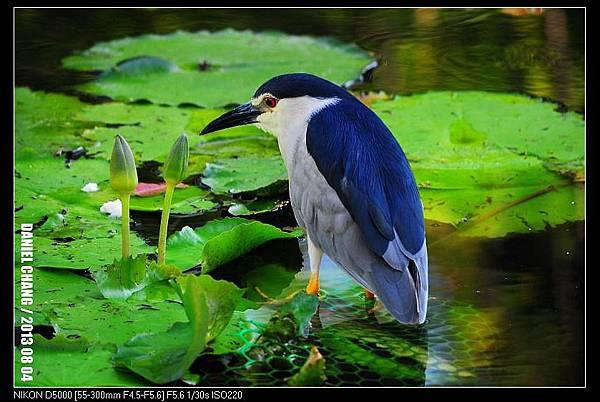 nEO_IMG_130804--Waterlily D5000 067-800.jpg