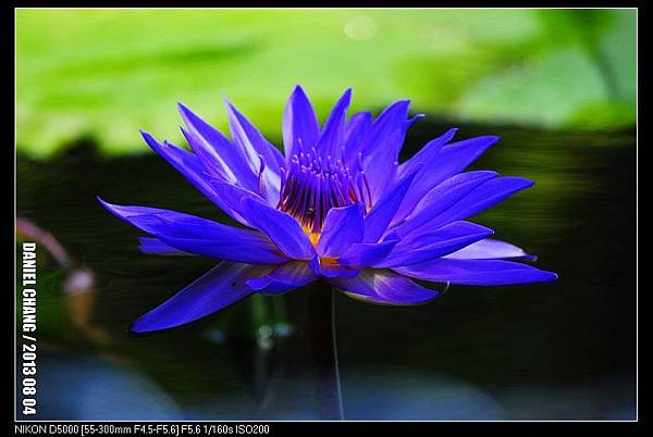 nEO_IMG_130804--Waterlily D5000 133-800.jpg