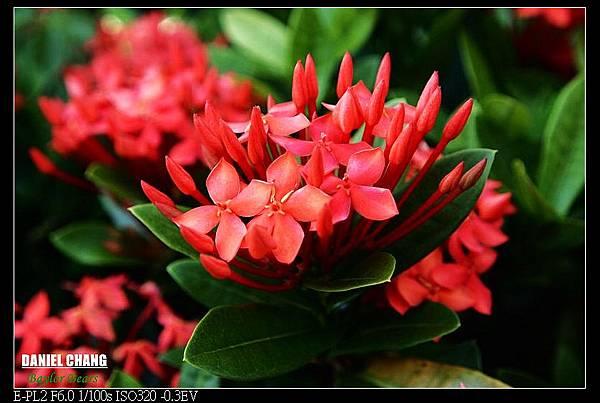 nEO_IMG_130810--Shilin Garden 027-800.jpg