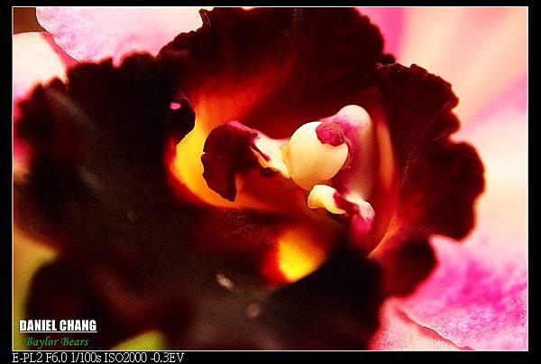 nEO_IMG_130810--Shilin Garden 074-800.jpg
