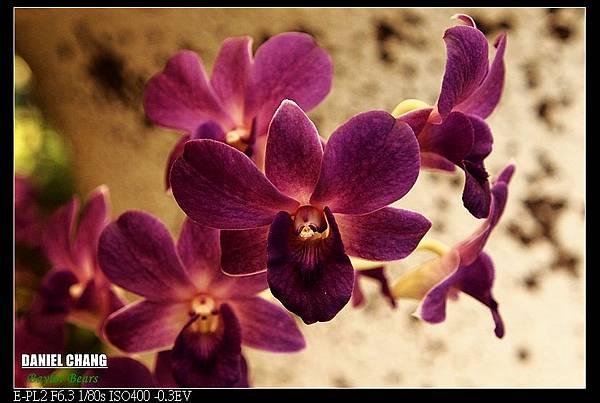 nEO_IMG_130810--Shilin Garden 095-800.jpg