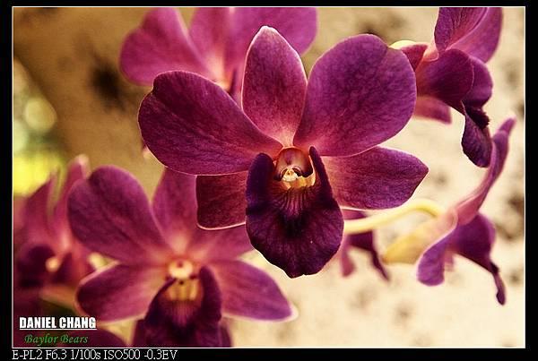 nEO_IMG_130810--Shilin Garden 096-800.jpg