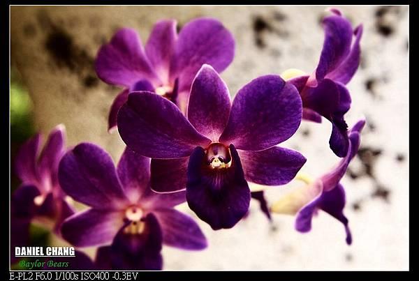 nEO_IMG_130810--Shilin Garden 100-800.jpg