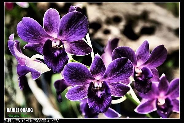 nEO_IMG_130810--Shilin Garden 105-800.jpg