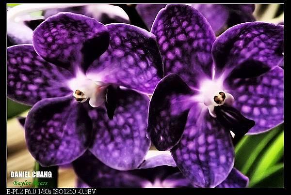 nEO_IMG_130810--Shilin Garden 131-800.jpg