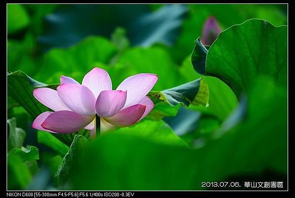 nEO_IMG_130706--HuaShan Center Waterlily 095-800