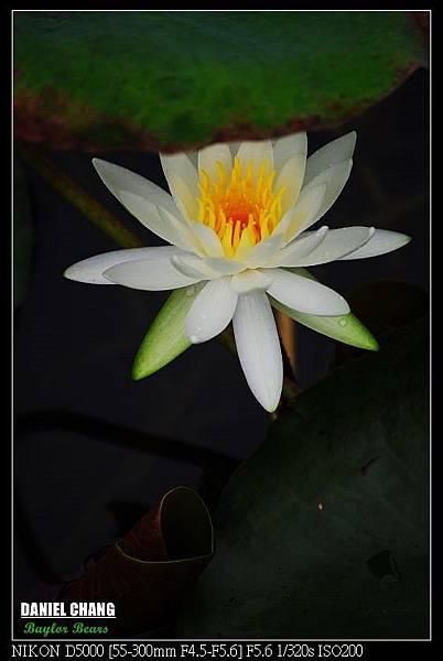 nEO_IMG_131102--Garden ShuangXi 058-800.jpg