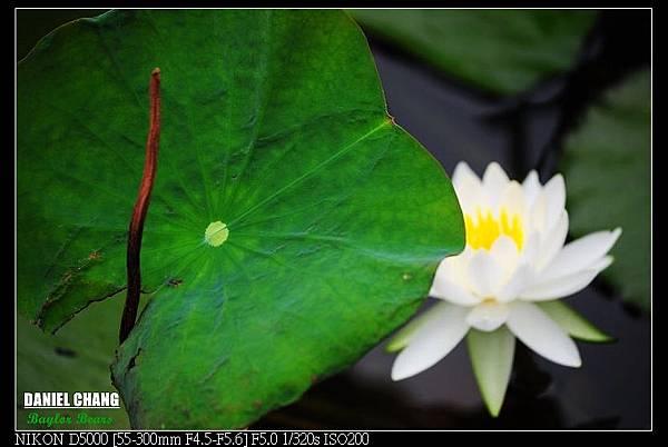 nEO_IMG_131102--Garden ShuangXi 066-800.jpg