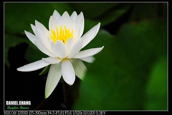 nEO_IMG_131102--Garden ShuangXi 072-800.jpg