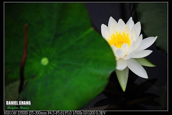 nEO_IMG_131102--Garden ShuangXi 081-800.jpg