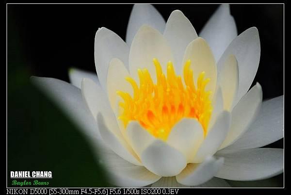 nEO_IMG_131102--Garden ShuangXi 085-800.jpg