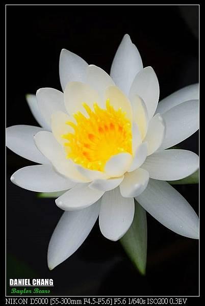 nEO_IMG_131102--Garden ShuangXi 097-800.jpg
