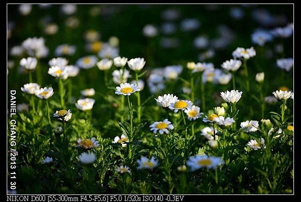 nEO_IMG_131130--Shilin Garden Festival 015-800.jpg