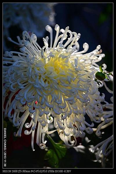 nEO_IMG_131130--Shilin Garden Festival 026-800.jpg