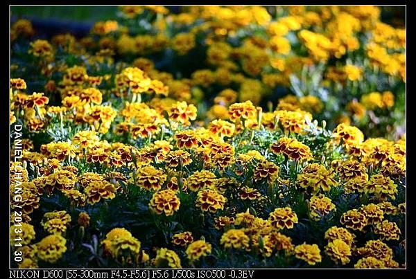 nEO_IMG_131130--Shilin Garden Festival 047-800.jpg