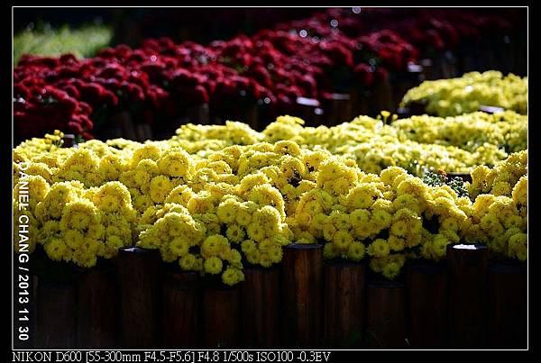 nEO_IMG_131130--Shilin Garden Festival 055-800.jpg