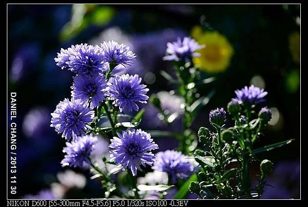nEO_IMG_131130--Shilin Garden Festival 057-800.jpg